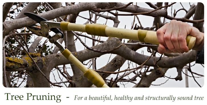 treepruning_slider1