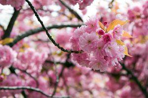 springtime_image1