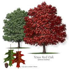 texas-red
